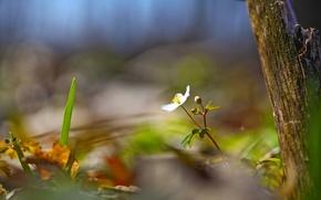 Обои лето, дерево, цветок, природа