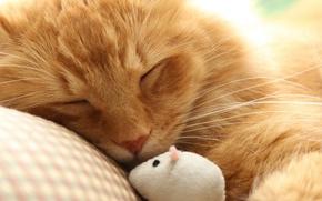 Картинка кошка, макро, мышка