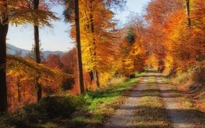 Картинка дорога, осень, лес, листья, деревья, горы, желтые, солнечно, золотая