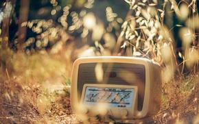 Картинка трава, макро, радиоприёмник