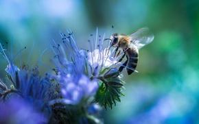 Картинка цветок, природа, пчела