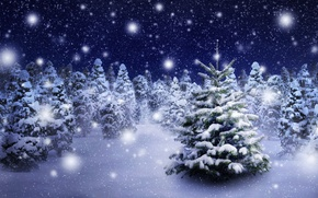 Картинка зима, лес, снег, снежинки, елка, nature, winter, snow