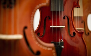 Картинка макро, музыка, скрипки