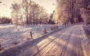 Картинка зима, дорога, снег, деревья, road, trees, winter, snow, landscapes, fields, trail, drops, sunlight, snowing, seasons, …