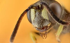 Картинка макро, фон, Wasp