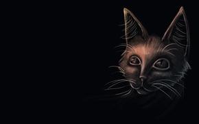Картинка кошка, взгляд, чёрный фон