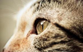 Картинка кошка, кот, морда, макро, мордочка, профиль