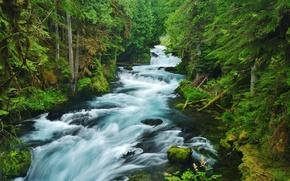 Картинка лес, деревья, природа, река, течение