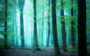 Картинка зелень, лес, свет, деревья, туман, by Robin de Blanche, Glimpse