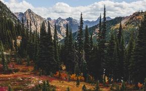 Обои природа, горы, осень, лес