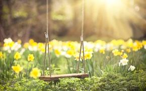 Картинка зелень, солнце, лучи, цветы, качели, весна, размытость, Нарциссы