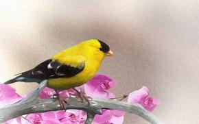 Картинка цветы, птица, ветка