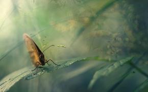 Обои макро, природа, бабочка, листок