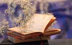 Картинка mood, bokeh, plant, books