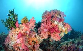 Обои море, цвета, вода, рыбки, кораллы, подводный мир
