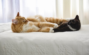 Обои friends, cats, bed, looking each other