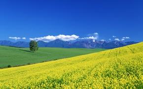 Картинка лето, облака, горы, дерево, долина, луг