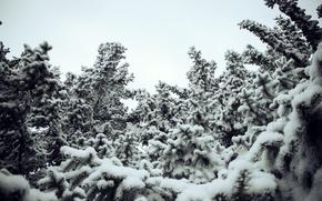 Картинка зима, снег, сугробы, ёлки
