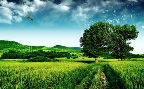 Обои поле, зеленый, дерево