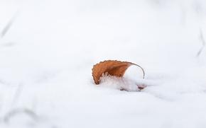 Картинка осень, снег, лист