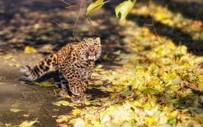 Обои ветка, пушистый, леопард, котёнок