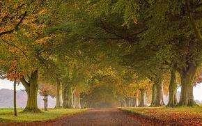 Обои дорога, осень, листья, деревья, Англия, аллея, England, Северный Дорсет, North Dorset