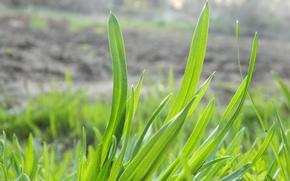 Картинка лето, трава, макро, зеленый
