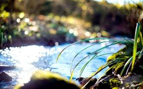 Картинка трава, вода, ручей, берег, солнечно, травинки
