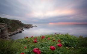 Картинка море, пейзаж, цветы, природа, обрыв, пионы