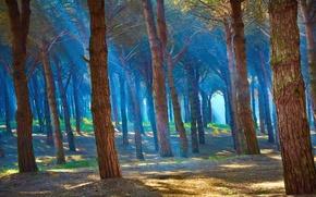 Картинка лес, лучи, деревья, пейзаж, природа, туман, синева, стволы, красиво, обои от lolita777