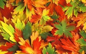 Обои осень, листья, Калейдоскоп
