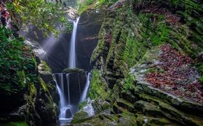 Картинка лес, скала, водопад, растения