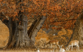 Картинка осень, дерево, олени