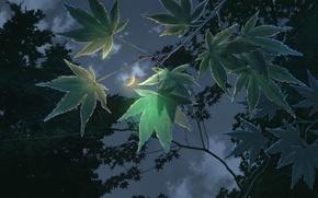 Картинка небо, облака, свет, ночь, ветви, листва, мультфильм, вечер, аниме, Луна, полумесяц, Сад изящных слов, The …