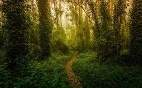 Картинка лес, свет, деревья, природа, тропа, ростения
