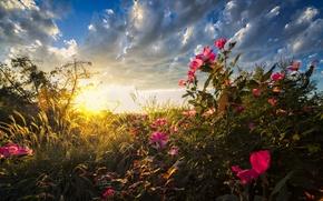 Картинка grass, field, nature, flowers, sunrise
