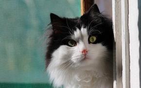 Картинка кошка, фон, окно