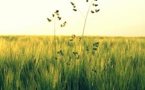 Картинка зелень, поле, трава, цветы, природа, зеленый, фон, widescreen, обои, растение, wallpaper, широкоформатные, background, полноэкранные, HD …