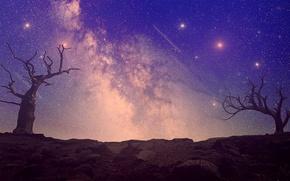 Картинка небо, деревья, ночь, природа, ретушь