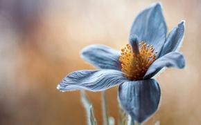 Картинка цветок, макро, близко