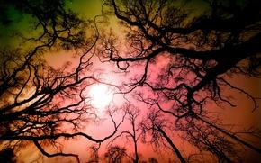 Картинка лес, небо, деревья, ветки, природа, Калифорния, США, Лос-Анджелес, Angeles National Forest, Tujunga