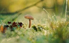 Обои боке, грибок, Antonio Coelho, роса, трава, гриб, мох