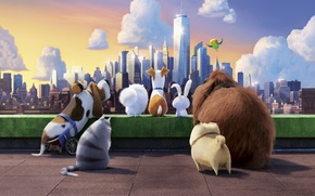 Картинка City, Clouds, Sky, chloe, Illumination, Cat, Dogs, Hamster, Bird, max, Animation, 20th Century Fox, Movie, ...