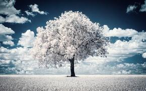 Картинка дерево, фотограф, photography, photographer, Björn Wunderlich
