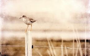 Картинка стиль, птица, забор
