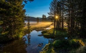 Картинка лес, солнце, природа, река, утро