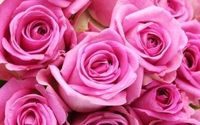Картинка цветы, розы, colorful, нежные, flowers, beautiful