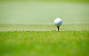 Картинка спорт, green grass, Golf ball