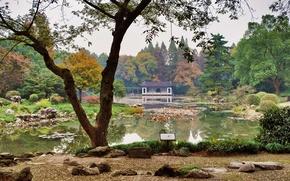 Картинка трава, деревья, пруд, камни, сад, Китай, кусты, Hangzhou Botanical Garden