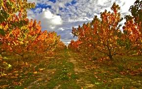 Картинка осень, лес, небо, листья, облака, сад, тропинка
